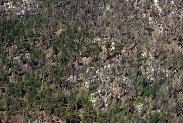 U.S. Forest Service aerial survey, Cleveland and San Bernardino forests, 2016.