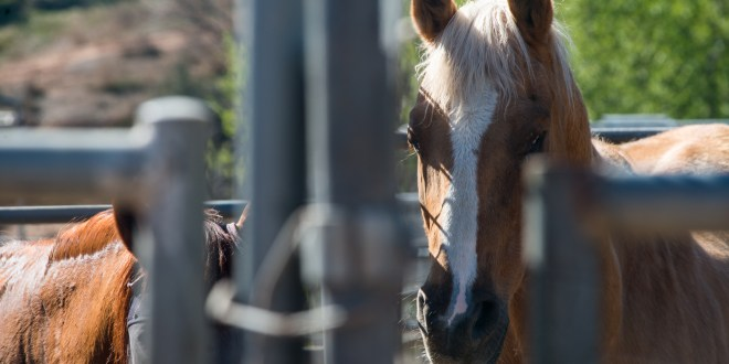 HiCaliber Horse Rescue approaching move-out date, mum on details
