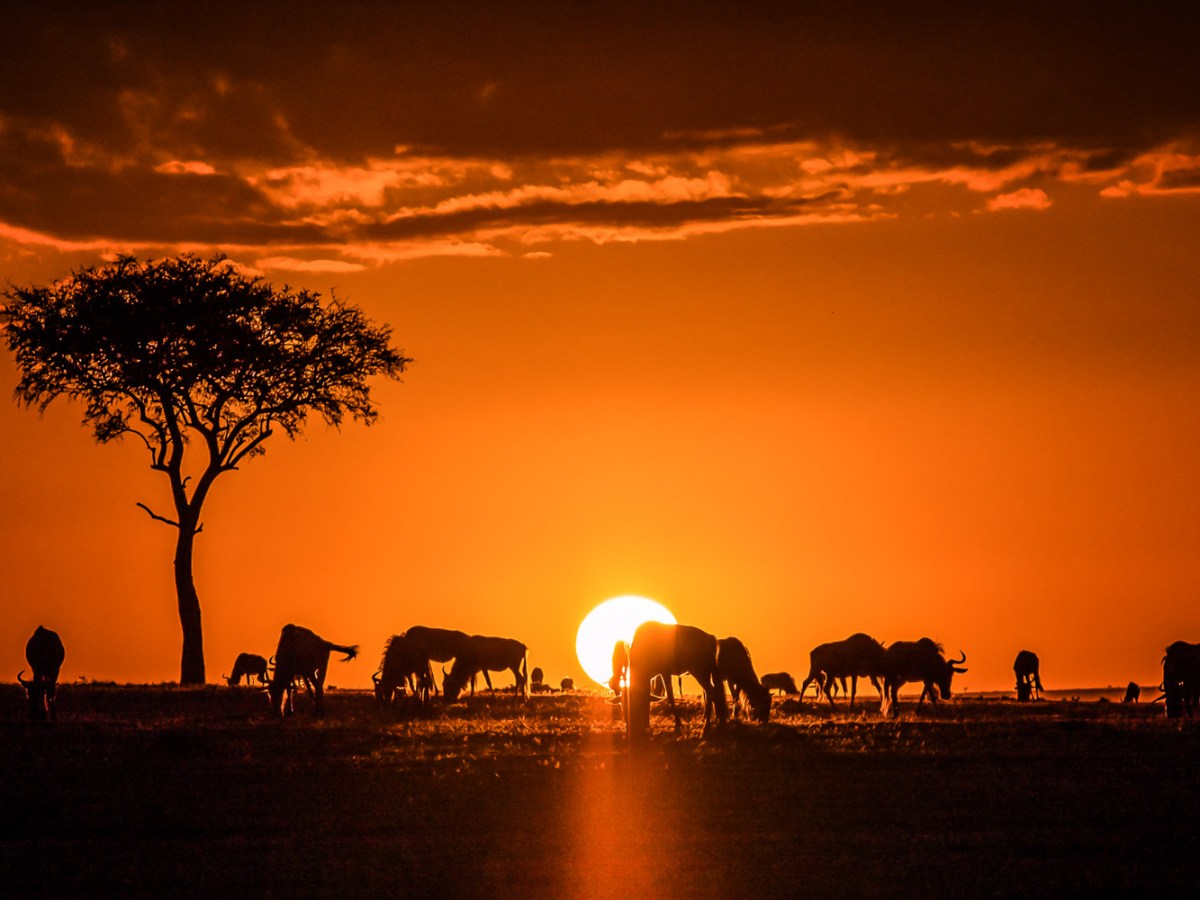 Sunrise on the Maasai Mara National Reserve in Kenya is shown in this photograph from Sept. 11, 2014.