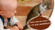 Humor-en-Positivo-dia-del-gato