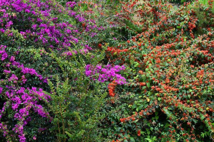 Colores de la naturaleza en la Sierra de las Minas
