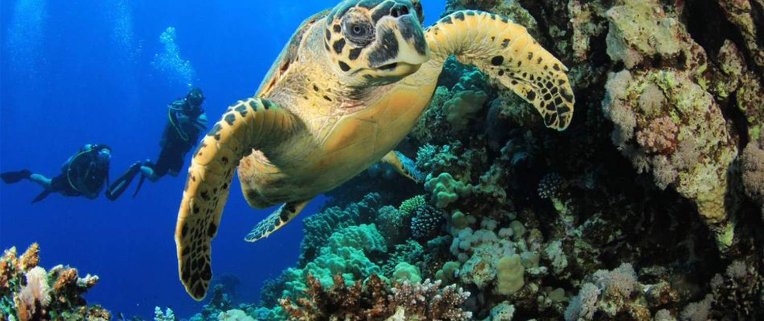 Infinite_Africa_Travel_Mozambique_AndBeyond_Scuba_Diving