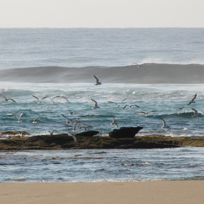 Infinite_Africa_Travel_Mozambique_Anvil_Bay_Anvil_Rock_Sea_Birds