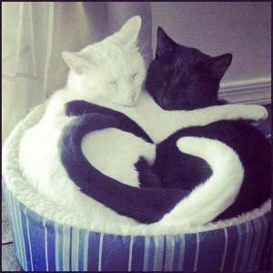 kittyheartphoto