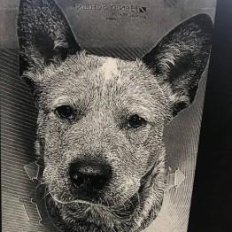 laser engraved photos minnesota acrylic pets dog cat horse family portrait