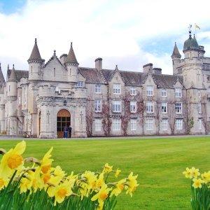 Royal Balmoral Castle with daffodils Scotland
