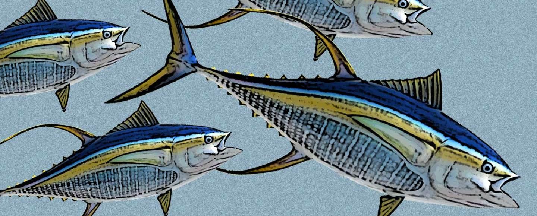Tuna Fish artwork Ellen Smith