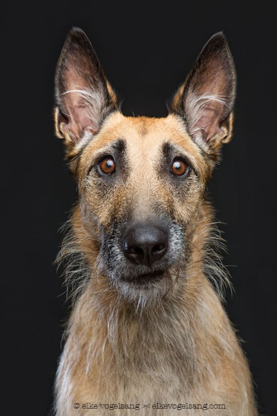 dogs-questioning-the-photographers-sanity-4__605