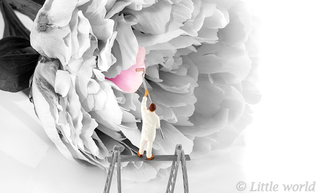 puppet painter paintinjg the flower pink peony with flower bud isolated on white background