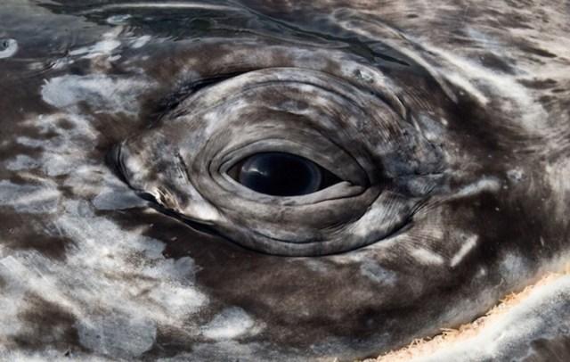 baleias_5