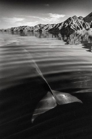 baleias_7-318x479