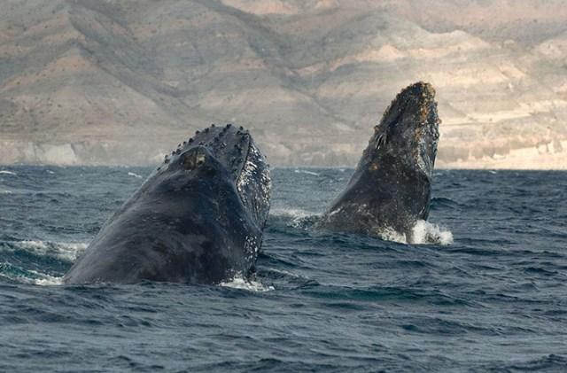 baleias_9