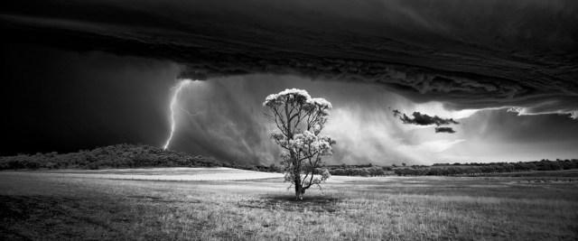 Foto: Luke Tscharke