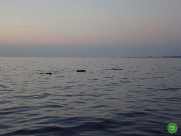 Delfines ;)
