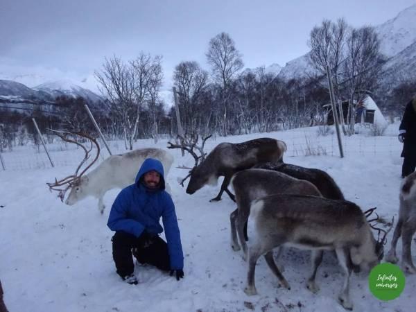 Visita a una granja de renos Sami (Laponia)