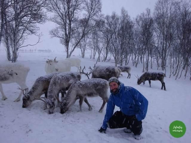Rodeado de renos sami laponia