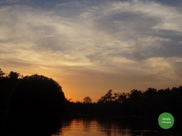 Atardecer en Tanjung Puting
