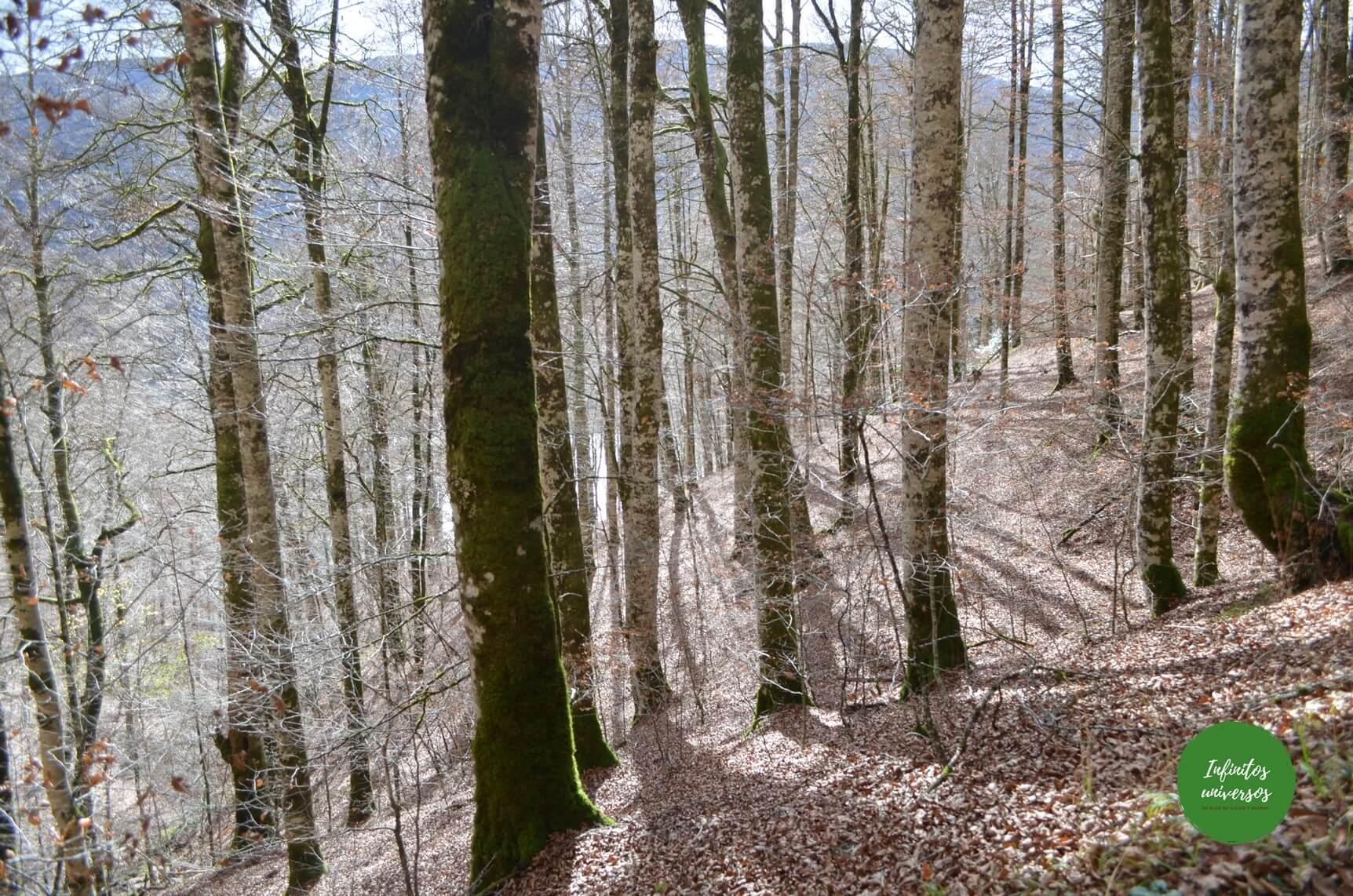 excursiones Selva de Irati (Navarra)
