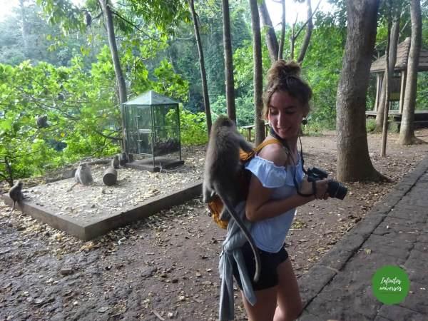 Qué ver y hacer en Ubud y alrededores (isla de Bali)