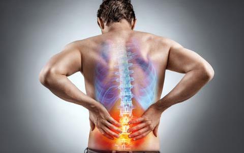 背骨の重要性