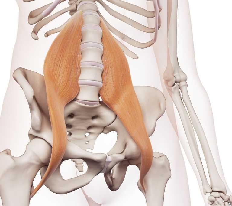 正しい姿勢の維持に必要な大腰筋とは|静岡市のカイロプラクティック施術整体