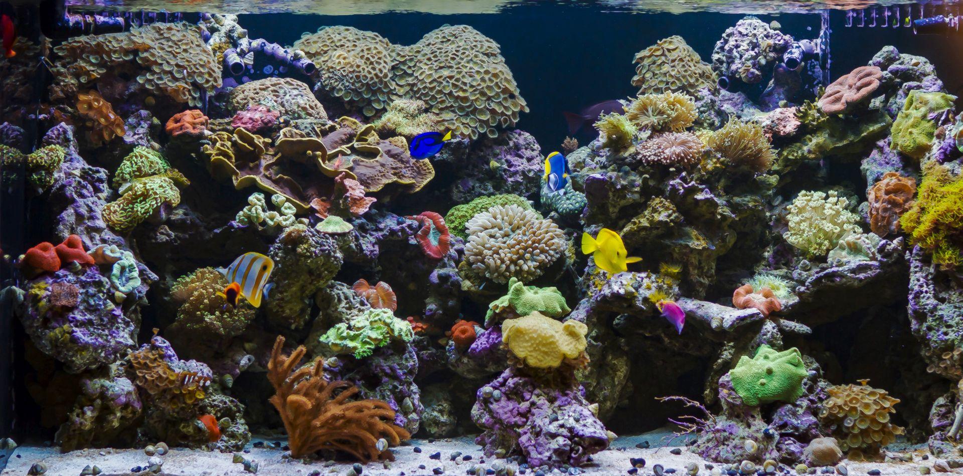 custom aquarium design installation