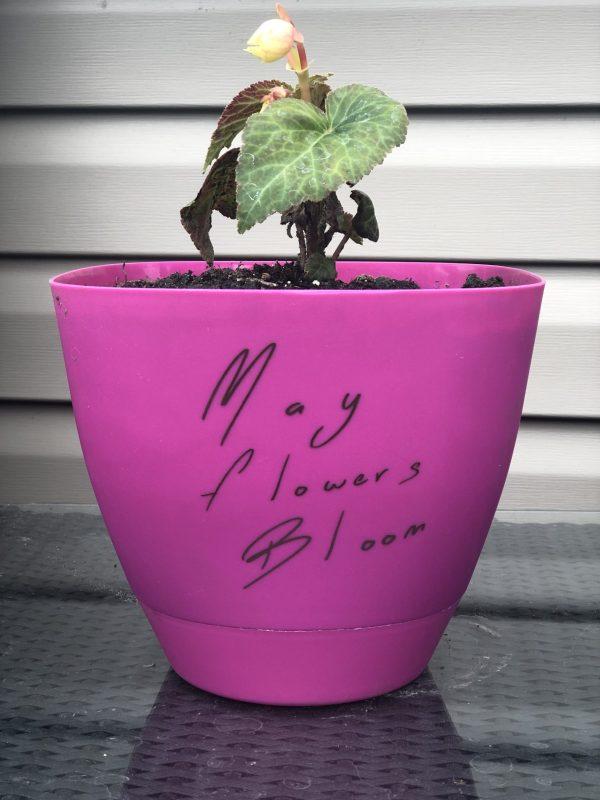 May Flowers Bloom Planter Pot Vinyl Decal
