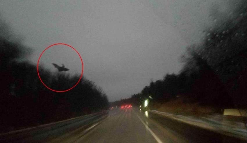 The Jersey Devil is photographed in Pennsylvania (real photograph of jersey devil)