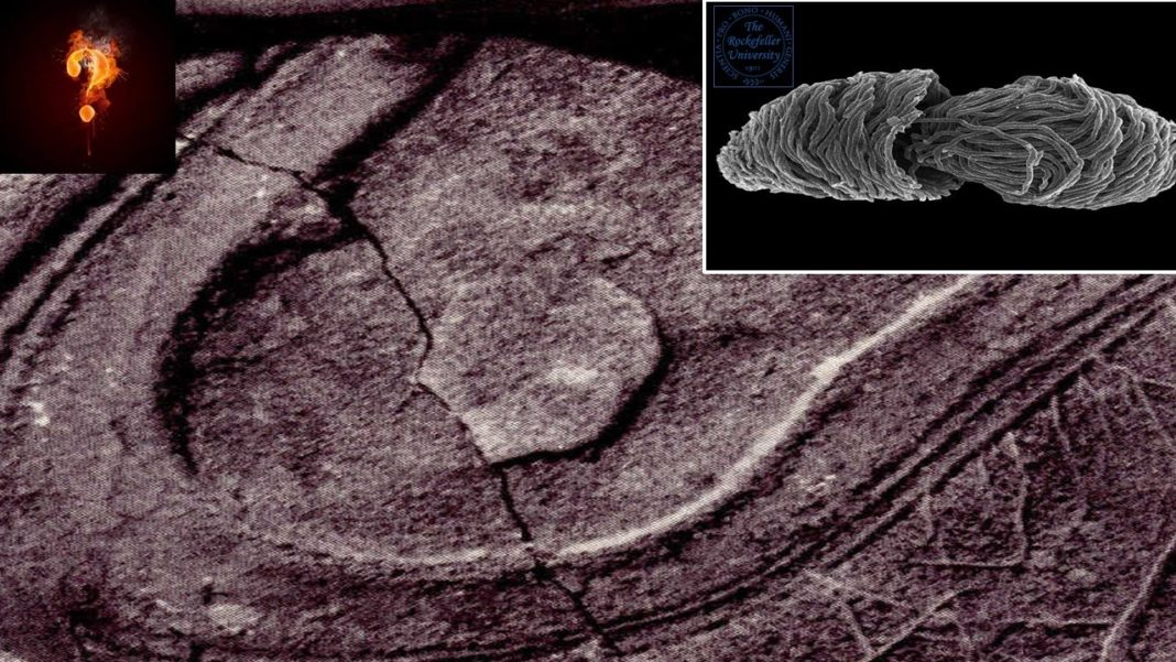 A Shoe Footprint Over 200 Million Years Old: Should We Rewrite History
