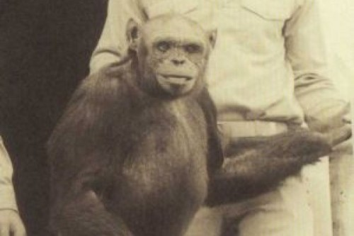 Recognized scientist assures that a human and chimpanzee hybrid was born in a US laboratory