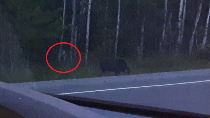 """What is this """"Mysterious creature"""" that appears in the Forest? (Video)"""