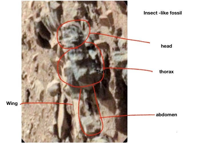 A renowned entomologist William Romoser, demonstrates the existence of insects on Mars