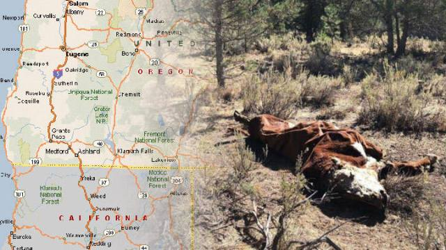 Mysterious Cattle Mutilations Have Reappeared In Oregon, USA