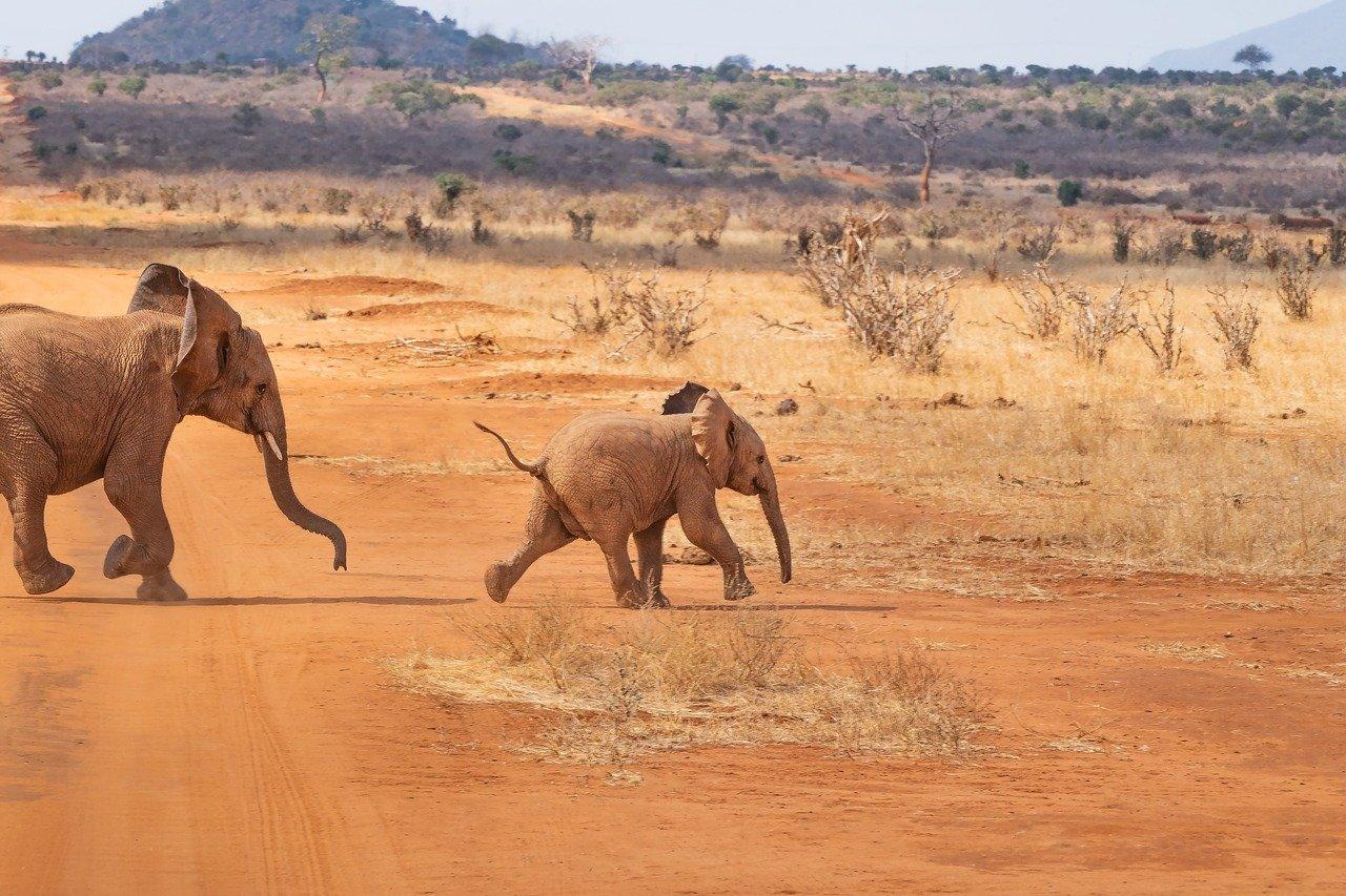 elefanti-algoritmo