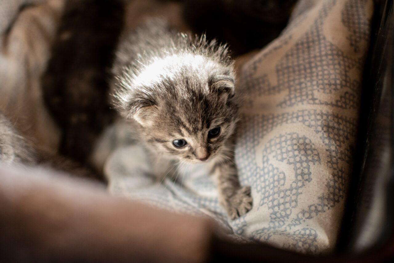 gatti-sterilizzazione