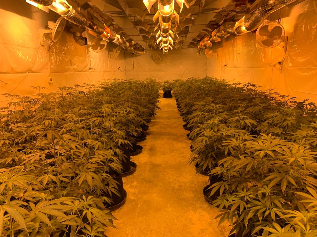 growing cannabis with infinitypot