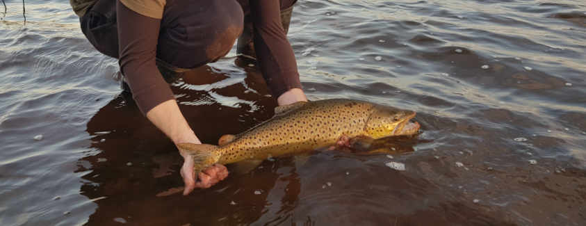 Tips for Catching Trout Fish