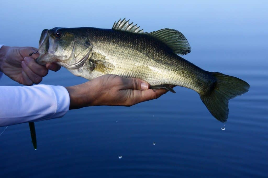 A Good Spinning Reel for Catching Bass