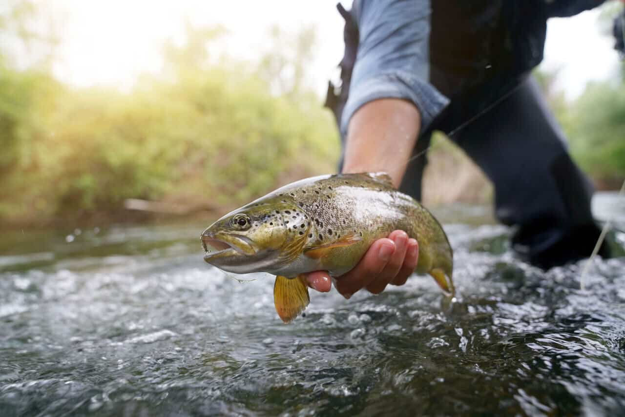 Releasing or Keeping Your Fish