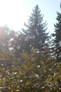 Sonnenlichtlampen im Herbst