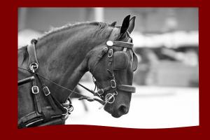 Une cheval portant des œillères