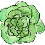 サラダ菜の美味しい食べ方と栄養 通年採れる便利な野菜