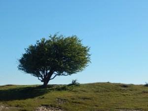 Der Wind prägt die Landschaft im Naturschutzgebiet Oranjezon
