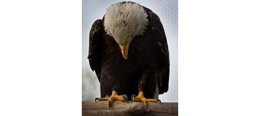 Spojené státy modlící se (ale potichu akaždý sám)