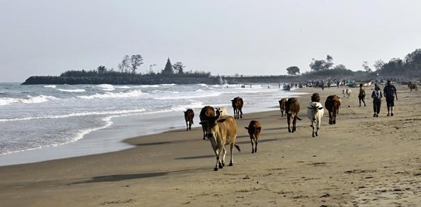 Fotoreportáž: Kráva jako matka izbraň