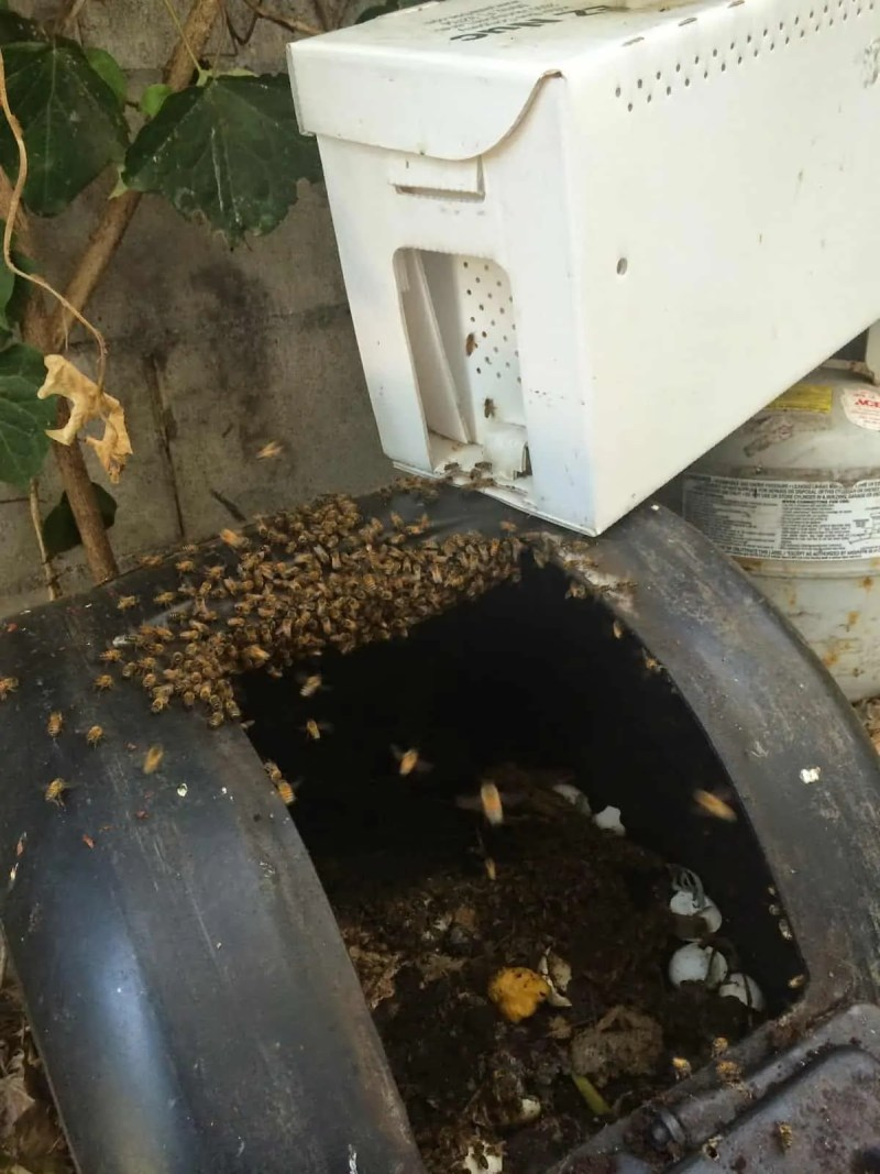 Bee Cluster Starting to Transfer