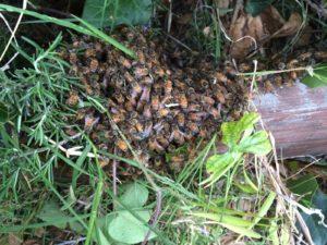 Swarm on the ground