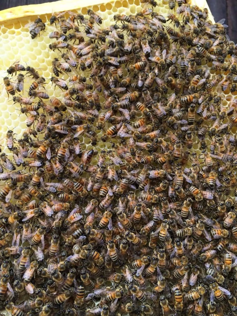 The New Dark Queen of the Bees