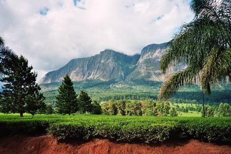 Teeplantagen, Mulantje-Bergmassiv/Malawi