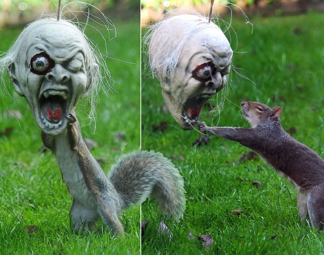 squirrel-scary-mask